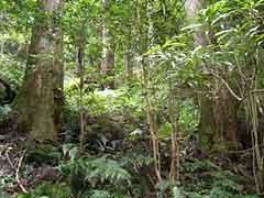 Nachi Falls / Nachi Primeval Forest
