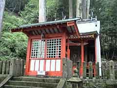 ケヤキの老樹(杉本神社)