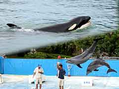 Kujira Hama Park / Killer Whale and Dolphin Show