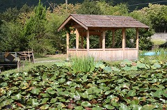 An arbor in front of a pond of water lilies